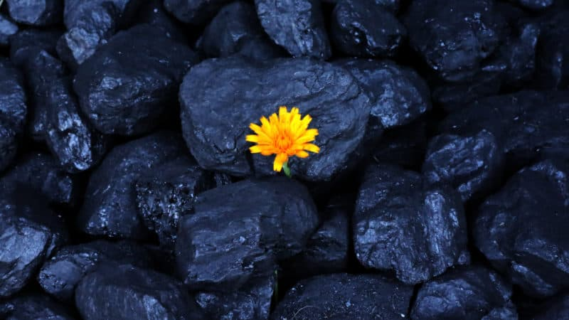 Yellow flower coal mines germany poland europe euracoal