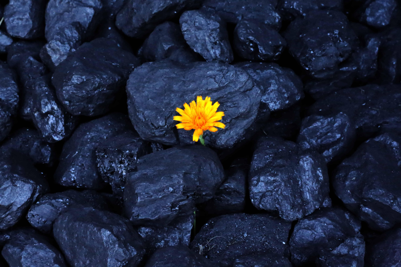 Yellow flower coal mines germany poland europe euracoal