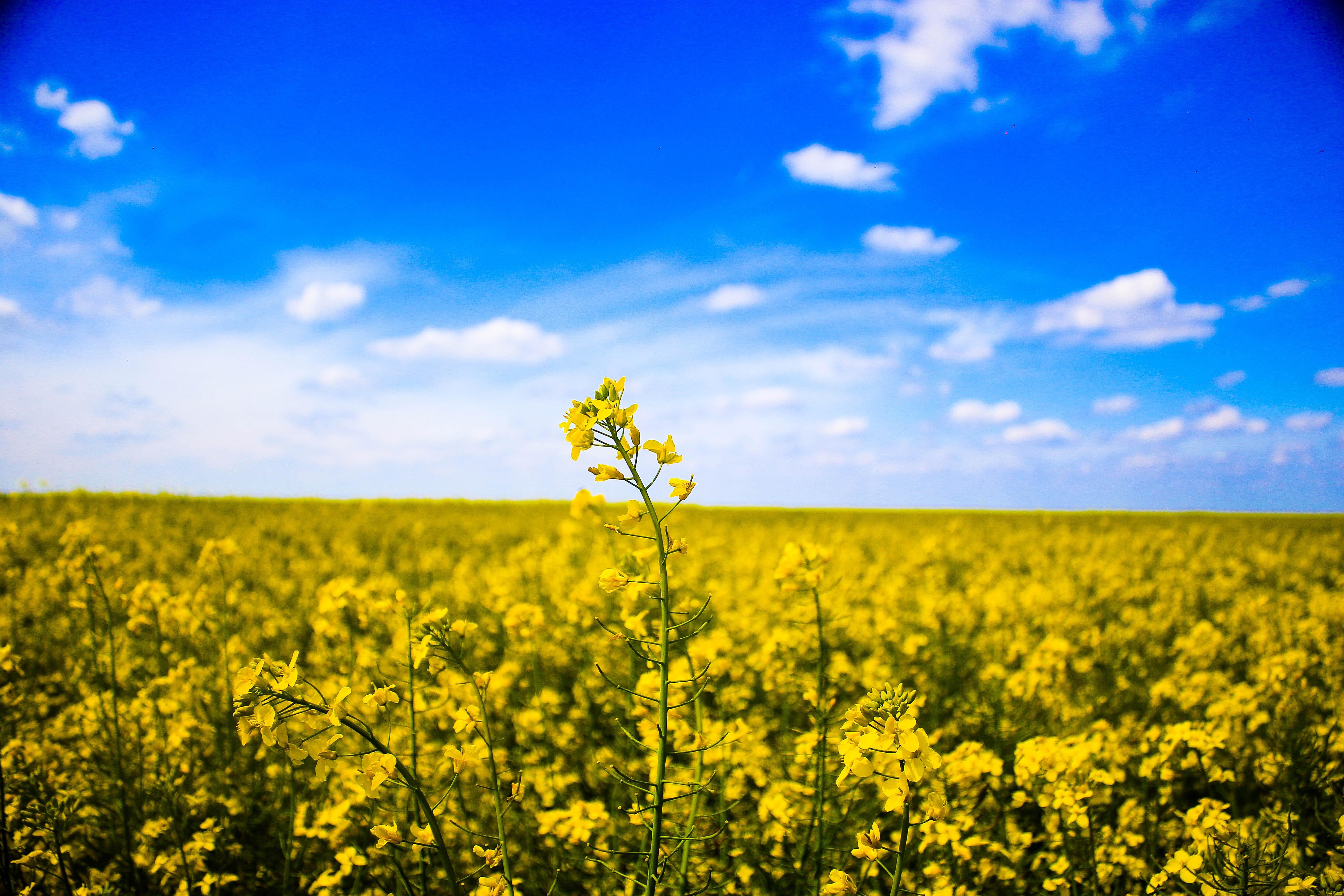 Grass field GMOs genetically modified organisms Europe European market food CAP