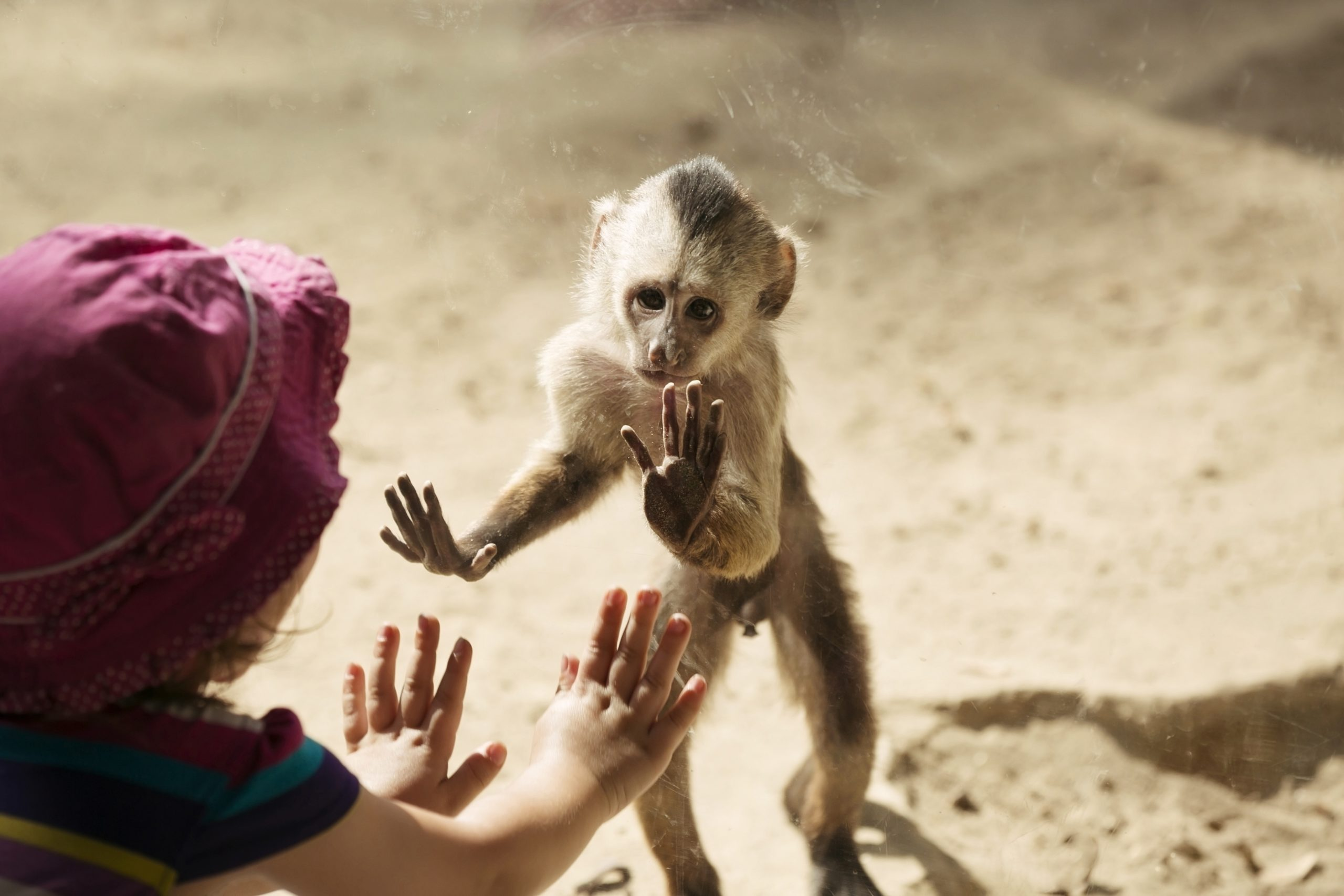 should we close the zoos animals protections captivity zoology